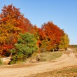 Autumnal landscape — Stock Photo #4169418