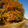 Autumnal landscape — Stock Photo #4169429