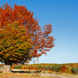 Autumnal landscape — Stock Photo #4169441