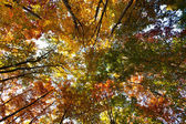 Fall landscape — Stock Photo