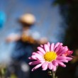 Macro of a daisy with the gardener in background — Stock Photo #4208242