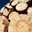 Logs against blue sky — Stock Photo