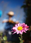 Macro of a daisy with the gardener in background — Stock Photo
