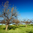 Stock Photo: Orchard