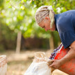 Old woman harvesting plums — Stock Photo