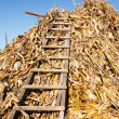 Stock Photo: Stack of corn stems