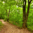 Footpath in forest — Stock Photo #4362048