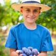 Cute kid with a handful of plums — Stock Photo