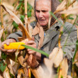Portrait of senior womharvesting corn — Stock Photo #4387479