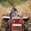 Rural at corn harvesting - Stock Photo