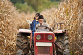 Rural at corn harvesting — ストック写真