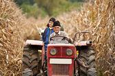 Rural at corn harvesting — Stockfoto