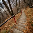 Stairst through the forest — Stock Photo