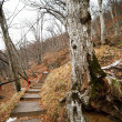 Stairst through the forest — Stock Photo #4491093