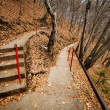 Stock Photo: Stairst through the forest