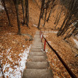 Stock Photo: Stairst through forest