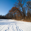 Winter forest landscape — Stock Photo #4580959