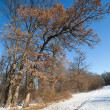 Stock Photo: Winter forest landscape