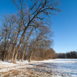 Winter forest landscape — Stock Photo #4580983
