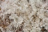 Macro of ice shapes — Stock Photo