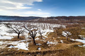 Orchard in the winter — Stock Photo