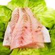 Fresh raw zander fillet — Stock Photo