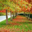 Autumn boulevard — Stock Photo