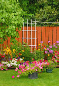 Colorful backyard garden — Stock Photo