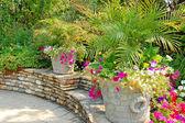 Patio garden — Stock Photo