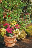 Patio giardino in fiore — Foto Stock
