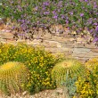 Desert botanical garden — Stock Photo