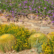 Desert botanical garden - Stock Photo