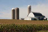 Cornfield with a barn and silos — Stock Photo