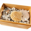 Seashells in Wooden Box — Stock Photo #4736489