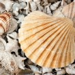 Seashells Background — Stock Photo #4736542