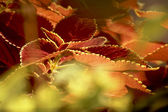 Leaves with Golden Rims — Stock Photo