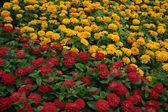červená žlutá padesát padesát — Stock fotografie