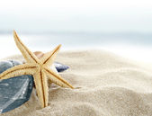 Starfish on the Beach — Foto de Stock