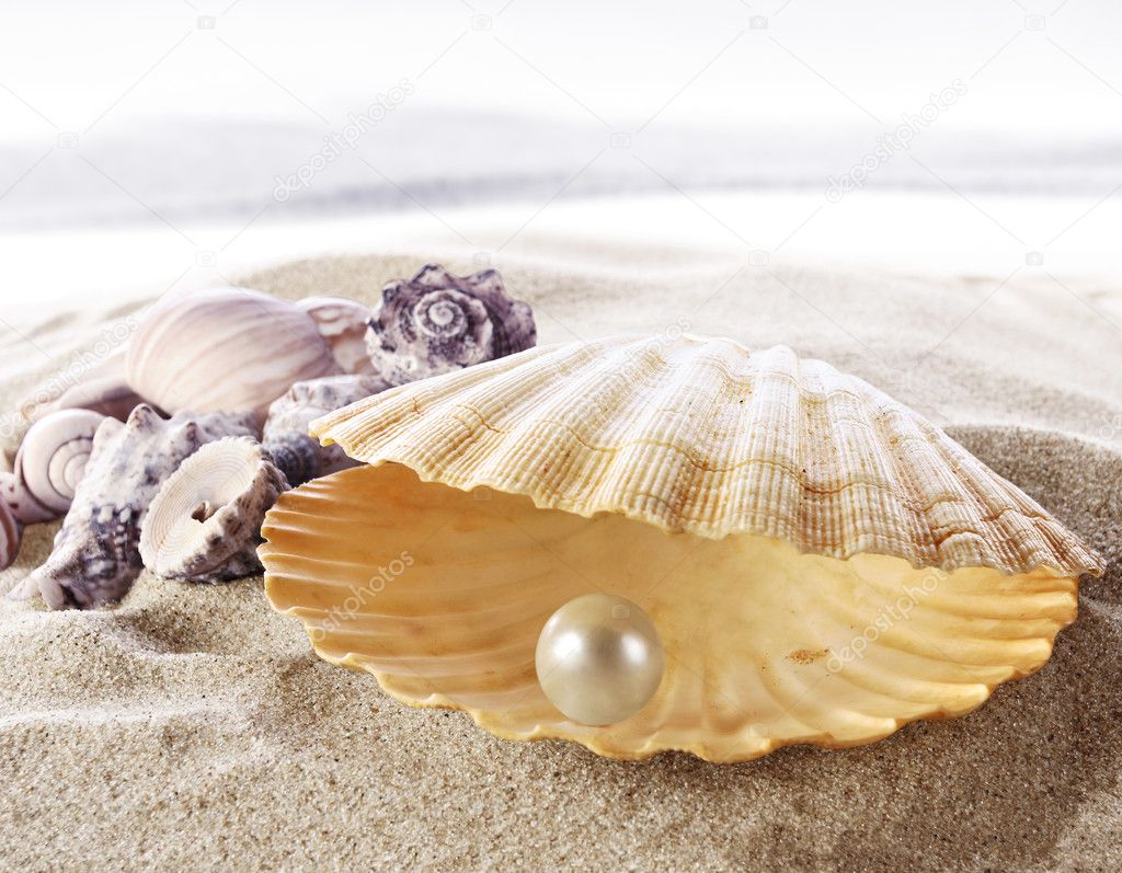 Coquille avec une perle — Photographie silvae © #5378367 Open Oyster Shell With Pearl