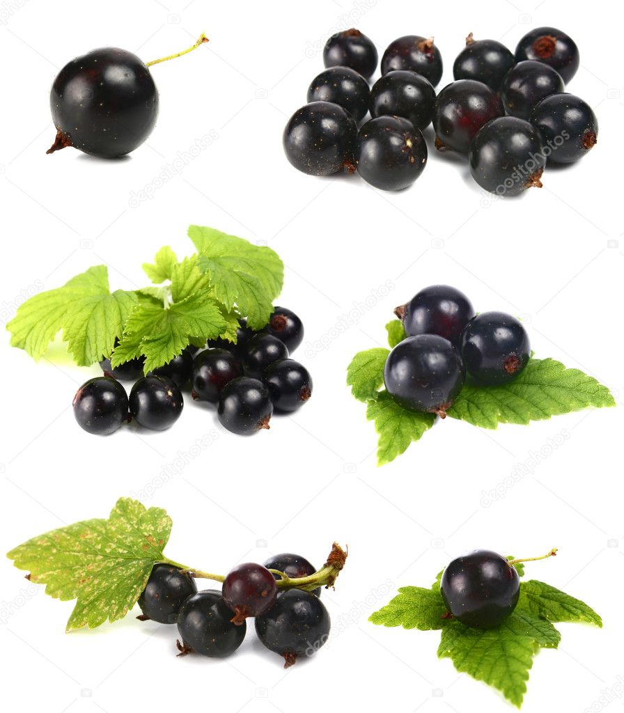 Black currants isolated on white background  Stock Photo #3928933
