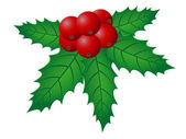 Christmas holly vector illustration — Stock Vector