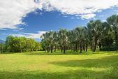 Paisaje tropical — Foto de Stock