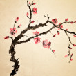 Chinese flower — Stock Photo #5110704