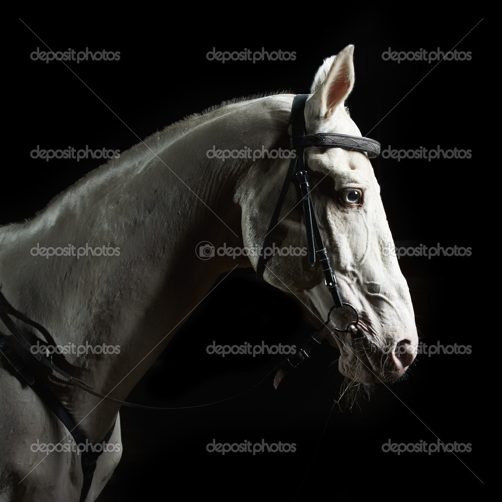 Closeup portrait white horse in the dark — Stock Photo #4931756