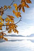 Autumn leaf — Стоковое фото