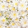 Flower background — Stock Photo #4085067