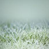 Grass on ice — Stock Photo