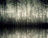 Nebel — Stock Photo
