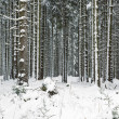Royalty-Free Stock Photo: Snowy forest