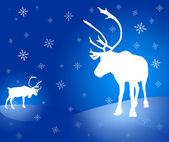Two caribou reindeer Christmas card — Stock Photo